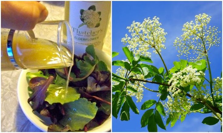 5 perc alatt összedobható tavaszi csoda: így készül a bodzás salátaöntet – morzsaFARM
