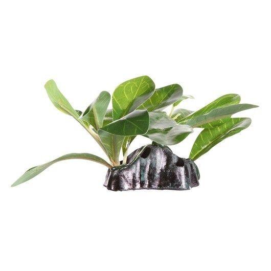 FLUVAL DECOR Anubias Draf/Base 15cm - #FaunAnimal Crean un hábitat exuberante, de apariencia natural con color añadido, dimensión ymovimiento; sin las condiciones o cuidadoespeciales que requieren las plantas vivas.