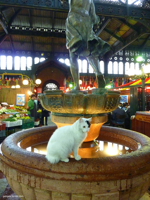 White cat in Santiago, Chile - Mercado Central (Central Market)