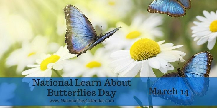 NATIONAL LEARN ABOUT BUTTERFLIES DAY Observedannually, March 14th is National Learn About Butterflies Day. Spring and summer are just right around the corner soitis a good time to take a few …