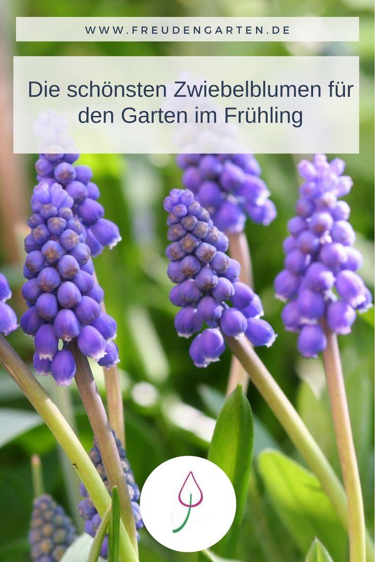 Zwiebelblumen Fur Den Fruhling Fruhlingsgarten Fruhling Pflanzen
