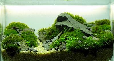 minitank aquascape                        .(maybe 6 inch tank!)