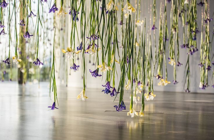 Rebecca Louise Law - The Iris