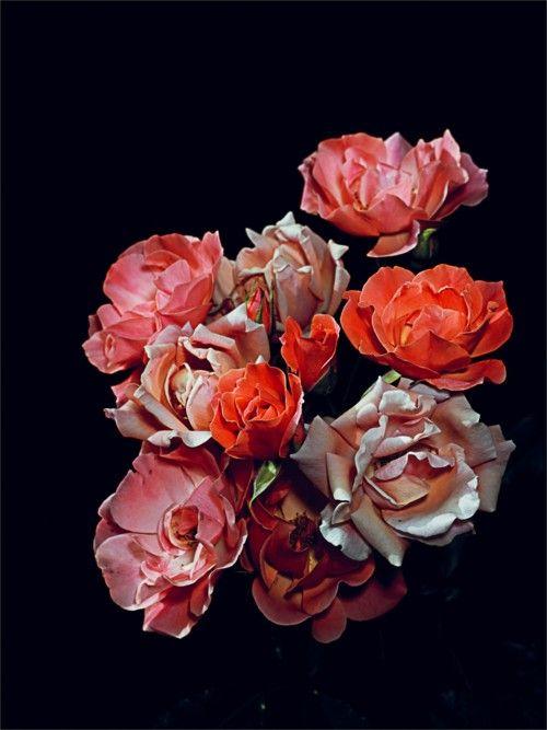Graham Lott   Rose Garden nº 7: Lott Rose, Unframed Graham, Florals Graham, Rose Garden, Roses Garden, Garden No 7, Graham Lott