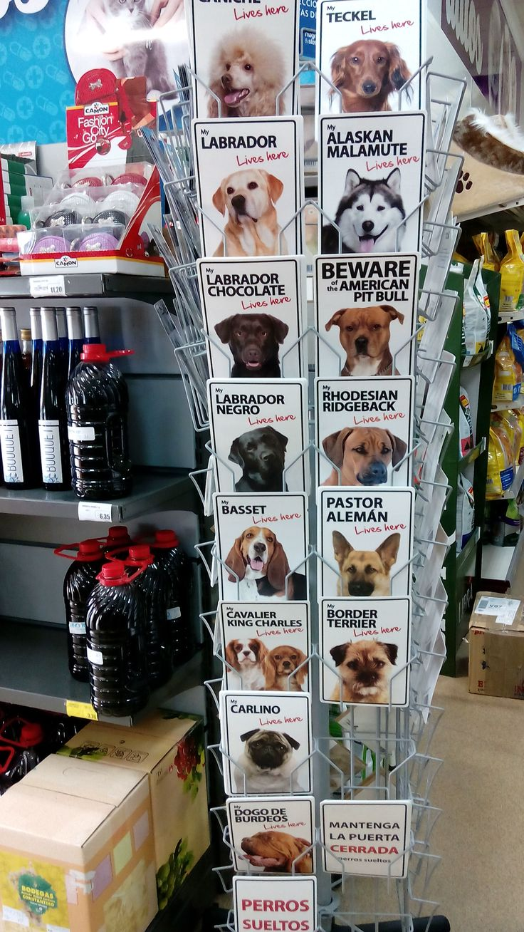 1000 images about novedades para mascotas on pinterest - Novedades para mascotas ...