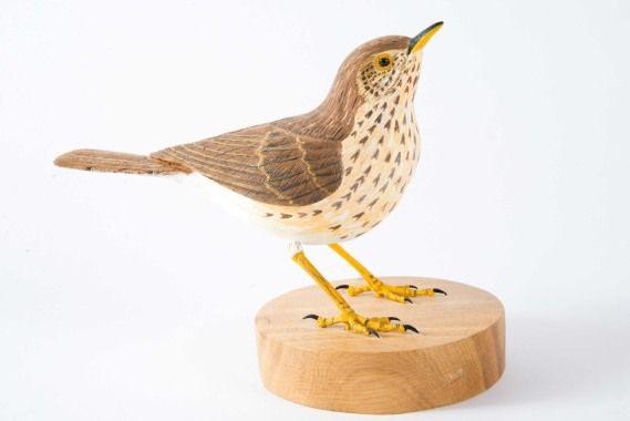 Song Thrush by David Harter, Advanced Songbirds
