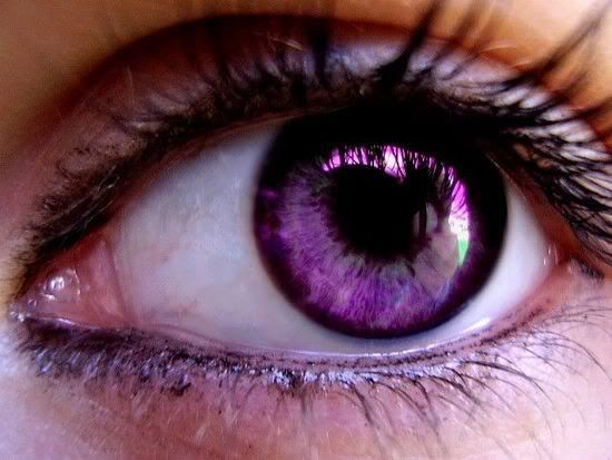 Trebond Purple Eyes