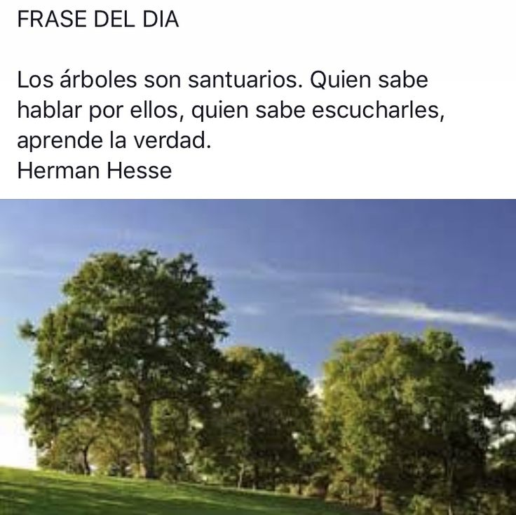 #citas #frases #frasesnaturaleza #frasedeldia #césped #jardinería #paisajismo #gardendesing #landscape #artificialgrass #grass #padel #Valladolid  #flores #plantas #naturaleza #tenis #podasenaltura #talas #árbol #flor #CastillayLeon #otoño www.activaparquesyjardines.es