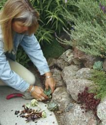 Planted Pockets Give Life to Stone Walls | Fine Gardening