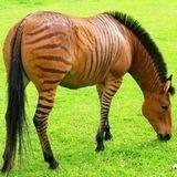 Albums photo de chevaux sur Cheval Annonce - Hébergez et exposez vos photos équestres