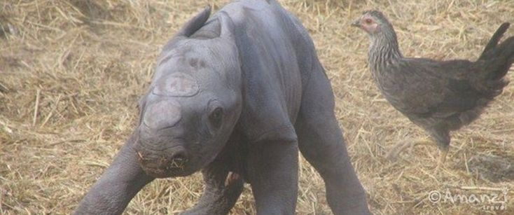 Volunteer with rhino in South Africa <3