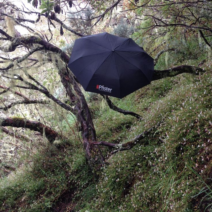 Pfister umbrella, La Réunion