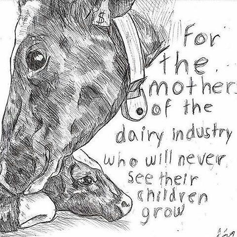 reason to ditch dairy - not your mother not your milk #vegan #compassion