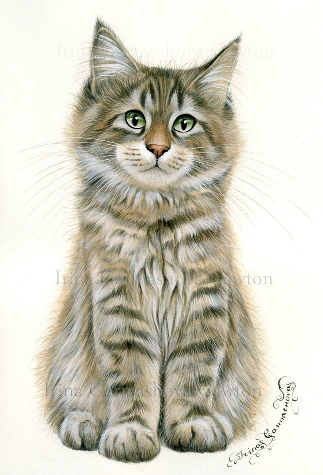 Oh my gosh .. what's not to love about this beautiful piece of art .. and it's of one of my most favourite kits ! ! Enjoy Maine Coon kitten by Irina Garmashova