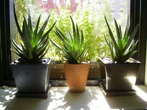 8 mejores im genes sobre qu hacer cuando cae mucha for Jardin 88 doris vera hermoza