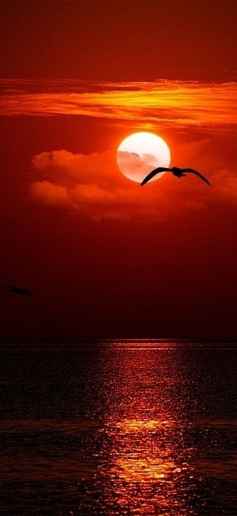 Orange sky with moon casting a red glow - Board: Moody Photos 3 .............. mood emotion moody moves makes me you us feel evokes atmosphere emotional feelings evocative images photos