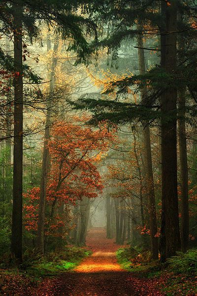 Autumn, The Netherlands. The woods are lovely, dark, and deep and I have promises to keep and miles to go before I sleep. Frost