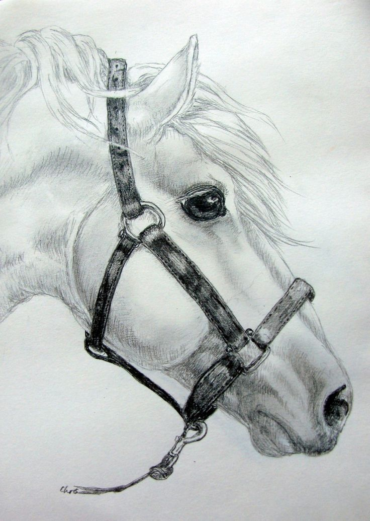 White horse – Shari Tordoff