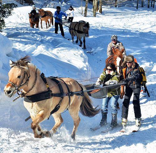 thierry-milherou-skijoering-poneyluge-2013 (40)   Flickr: partage de photos!