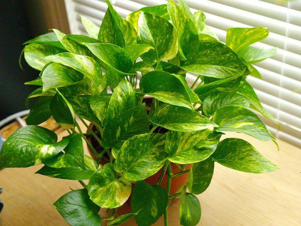 Installer des plantes dépolluantes.