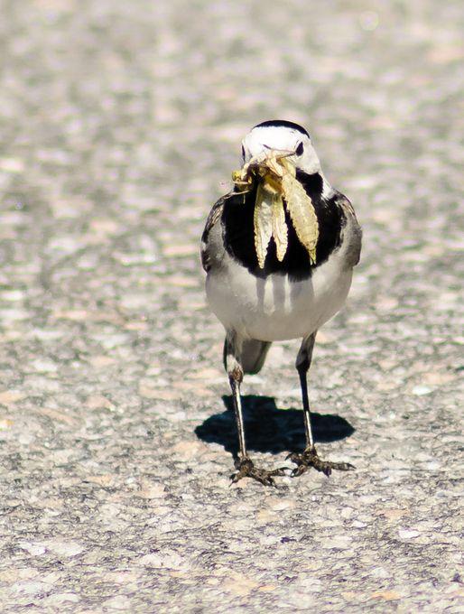 "Photo ""oldelphicom-birds-1"" by oldelphi"