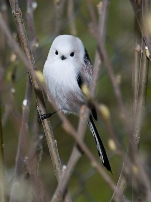 Possibly The Cutest Bird Ever - Cutest Paw