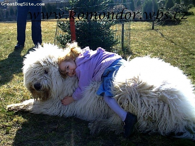 Hungarian dog komondor