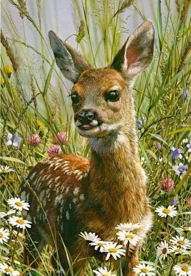 Spring Fawn by artist Carl Brenders.