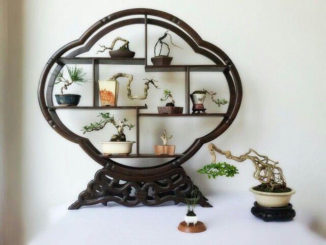 Shohin Bonsai display