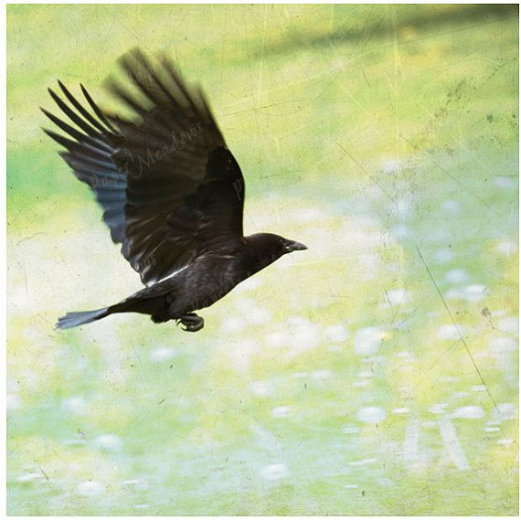 Crow Flying Raven Photo Download Bird Photography by PaperMeadows, $4.00