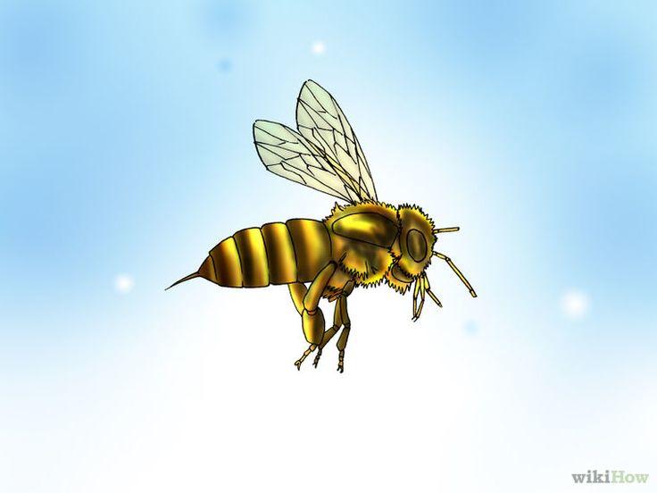 Buy Honey Bees Step 1 Version 2.jpg