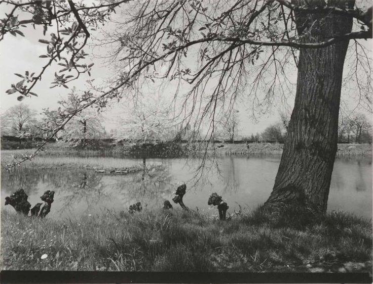 UNTITLED. 1966. Vintage ferrotyped gelatin silver print - Josef Sudek (1896-1976)