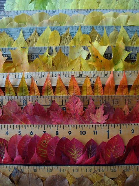 how is your autumn measuring up? by knitalatte11, via Flickr