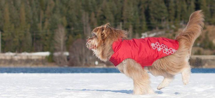 Gear up for playtime in the winter elements! Browse Outdoor Dog Gear for snowy outings.