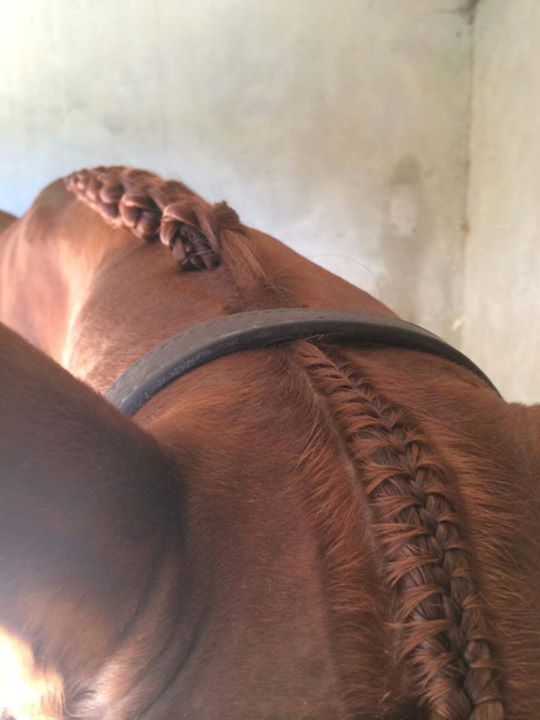 Those are some seriously nice looking braids.