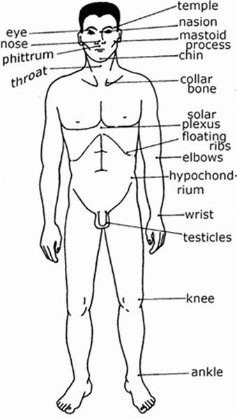 Image result for Pressure Points to Knock Someone Out | Kyusho ...