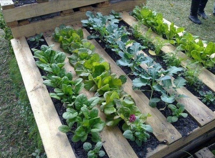 Palette de jardin - Inspirations Jardins
