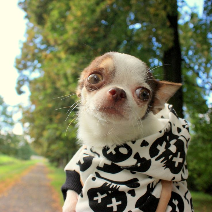Halloween dog hoodie is available in Semba Design. Is your dog ready for halloween?)