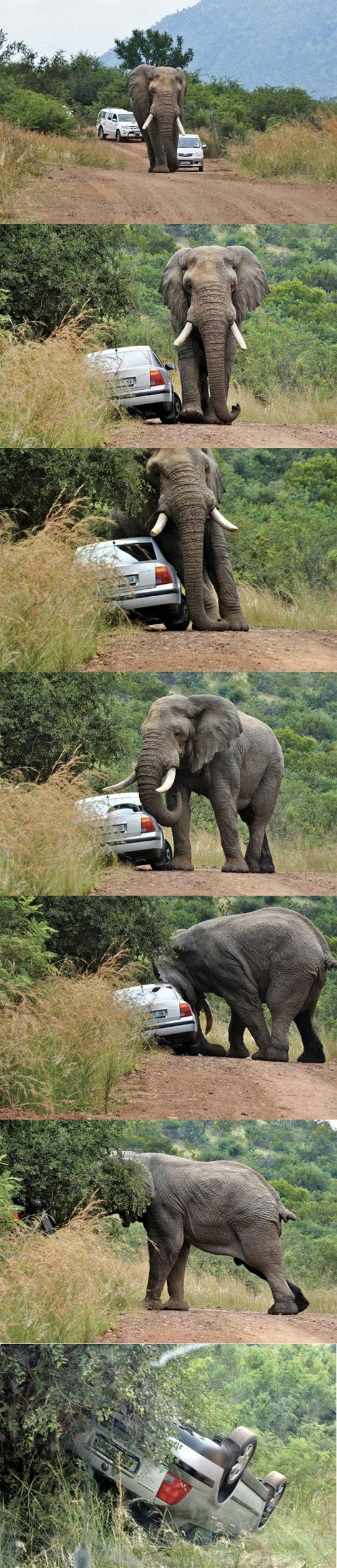 Never honk at an elephant...elephant road rage