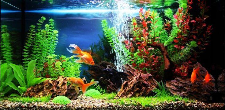 Декор пресноводного и морского аквариума