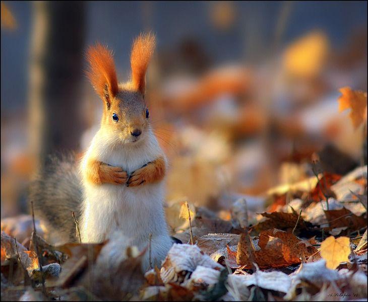 Пейзаж с рыжими ушами
