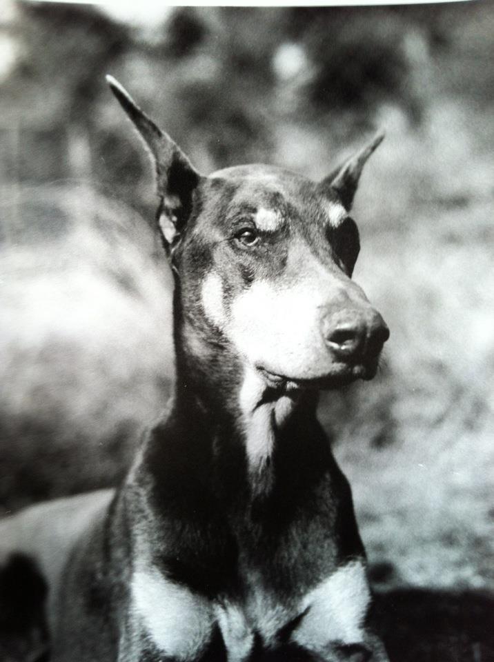 Forrest - doberman pinscher  November 10, 1998-December 28, 2011