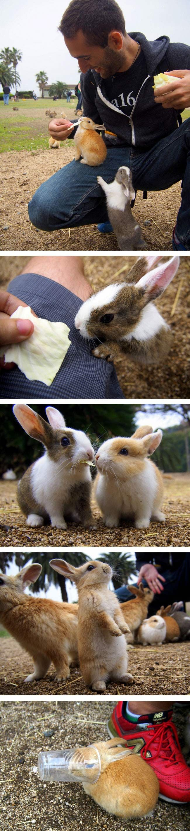 There's a a small island located in the Inland Sea of Japan that is completely overrun with cute, fluffy bunnies who are the island's main inhabitants. How is this not the cutest thing EVER!!