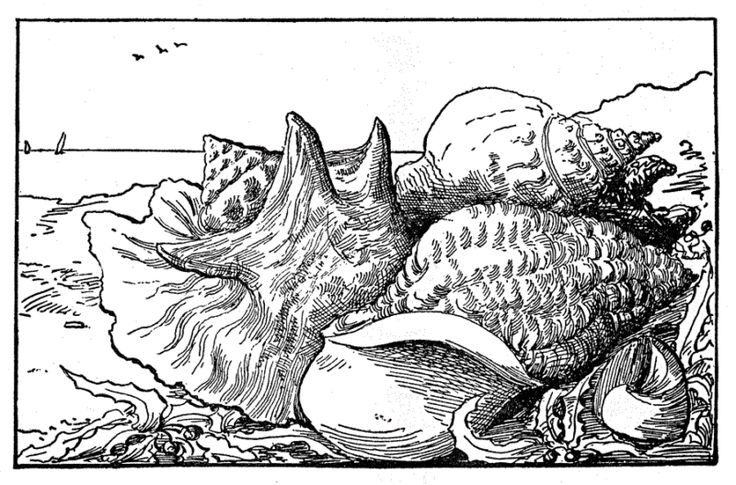 """Liger coloring pages ~ 18 best """"Treasures of the Ocean"""" Book and Pages images on ..."""