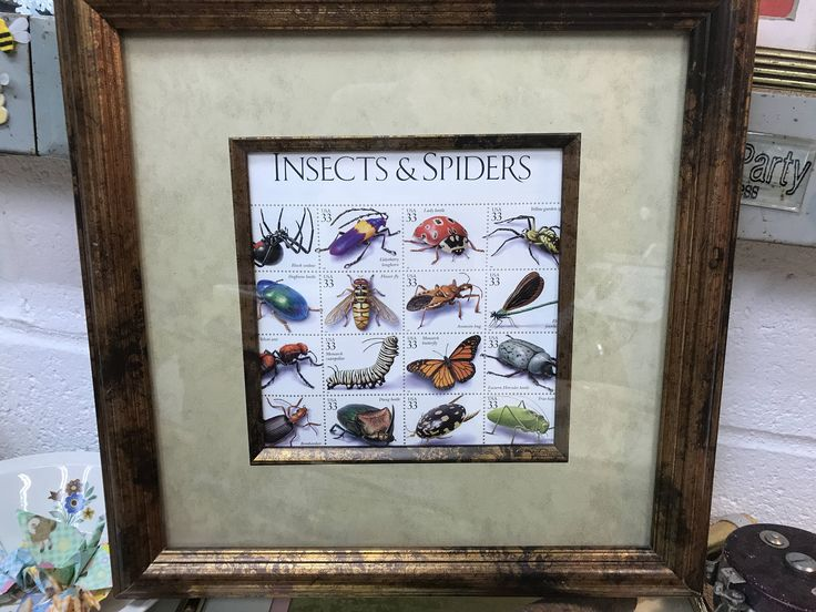 A personal favorite from my Etsy shop https://www.etsy.com/listing/528160435/insect-picture-us-postage-stamps-framed