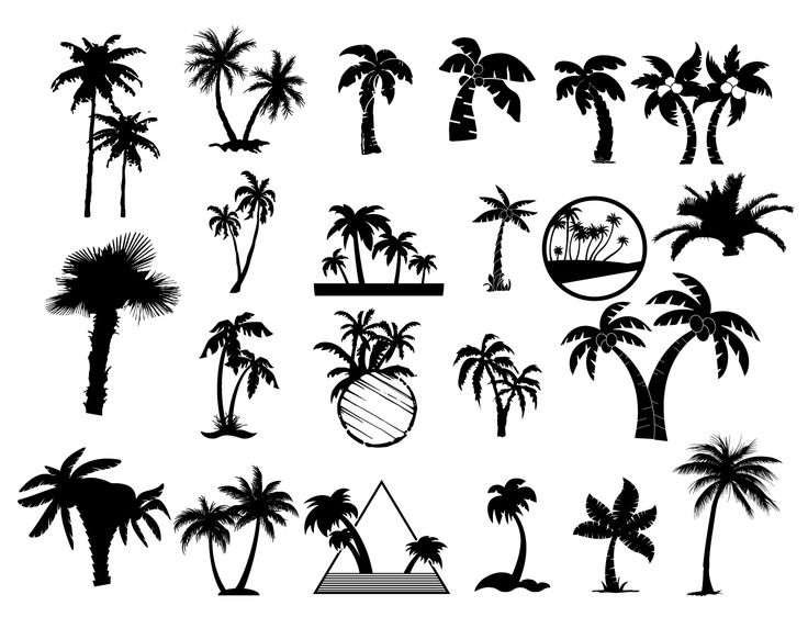 Silhouettes of palm trees in many variants with one, two tree growing on the ground