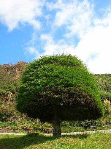 Ancud verde