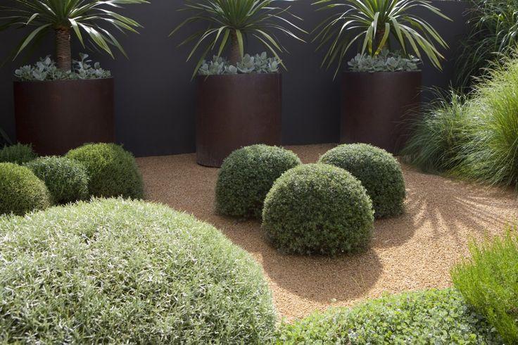 Westringia balls, lomandra
