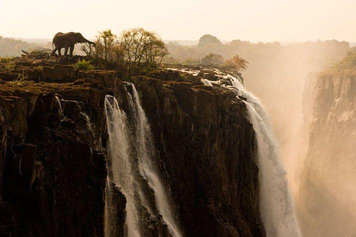 Elephant on Victoria Falls (Zambia/Zimbabwe) by Marcel van Oosten