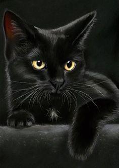 Black Velvet Black Cat Pinterest Cats Black And Kitty